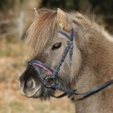 Bridon cuir muserolle combinée poney Unicorn 2 Waldhausen