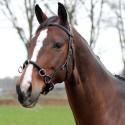 Caveçon cuir Equestra