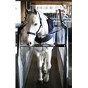 Chemise de marcheur cheval 160 g Kentucky