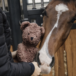 Jouet pour cheval relaxant ours en peluche - Kentucky