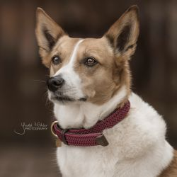 Collier chien nylon tressé - Kentucky