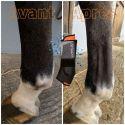 Guêtres de récupération cheval Capsular ( +1 baume de 100 ml ) - Akhal