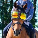 Masque/lunettes de protection cheval Evyzor - Equick