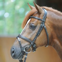 Bridon cheval muserolle Pull Back Filip - Kavalkade