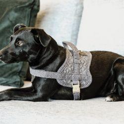 Harnais pour chien Body Safe Wool - Kentucky Dogwear