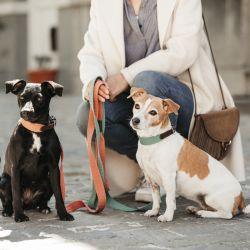Collier pour chien Jacquard - Kentucky Dogwear