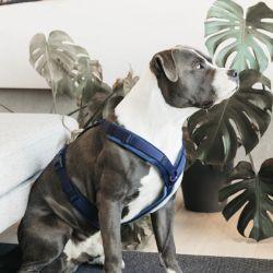 Harnais pour chien actif Velvet - Kentucky Horsewear