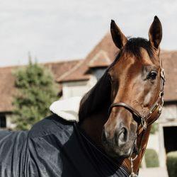 Protection de garrot cheval Horse Bib - Kentucky Horsewear