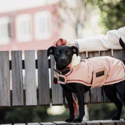 Manteau chien imperméable 160gr - Kentucky