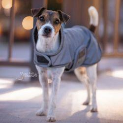 Manteau pour chien imperméable et réfléchissant - Kentucky Dogwear