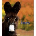 Poney et âne