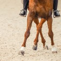 Locomotion cheval