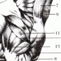 Muscles et articulations