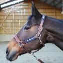 Equipement pour le cheval Antarès