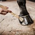 Pinceau sabot cheval