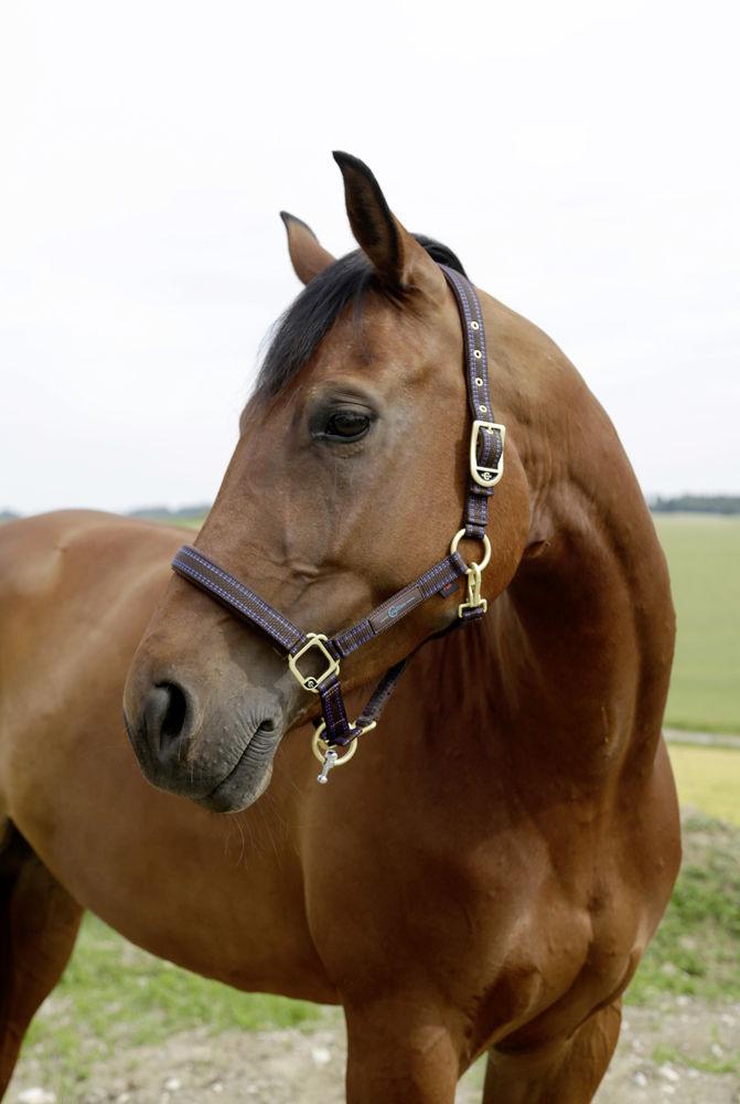 licol Goleygo - Equestra