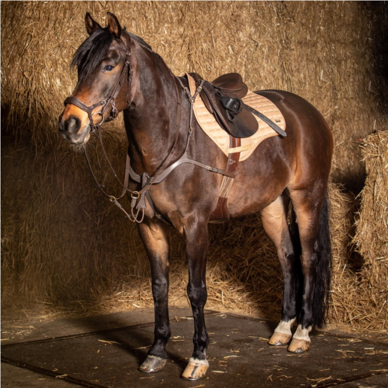 Collier de chasse deluxe Harry's Horse