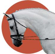 image de la catégorie cheval