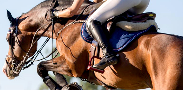 Cravache équitation cavalier