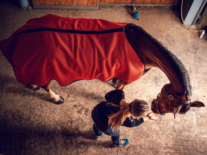 Cape capsular akhal - Equestra
