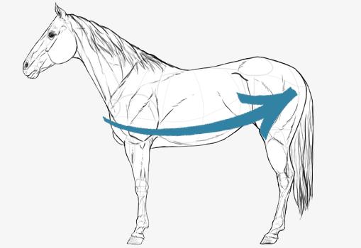 Mesure cheval