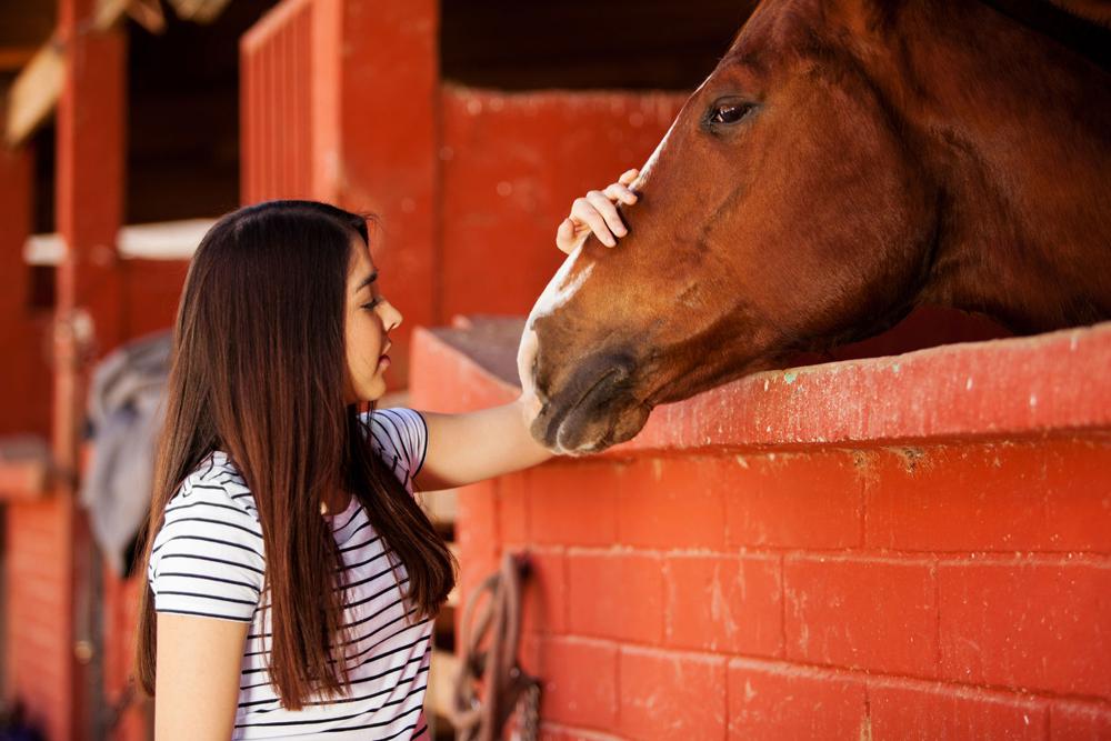 Professionels du cheval